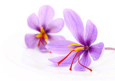 Close up of saffron flowers Royalty Free Stock Photos