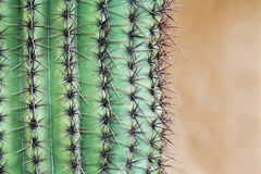 Close up of a Saguaro Cactus with Copy Space Royalty Free Stock Images