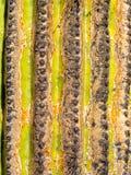 Close up of a Saguaro stem Stock Photos