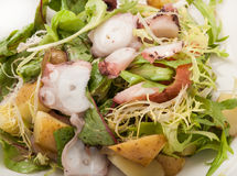 Close-up salad from vegetables and octopus on plate Royalty Free Stock Photography