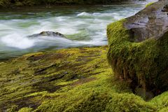 Close up of Salmon River rushes by mossy rocks. Rushing waters of the Salmon River in Mt. Hood National Forest pass it`s banks of moss covered rocks stock photo