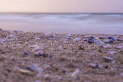 Close-up Shells on the beach in the sunset, nature background stock photo