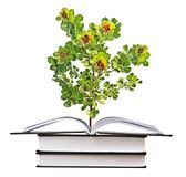Sapling growing from book Royalty Free Stock Photo