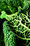 Close-up of savoy cabbage Royalty Free Stock Image