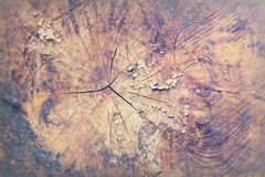 Close up of sawn tree trunks with rings Royalty Free Stock Image