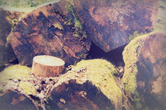 Close up of sawn tree trunks with rings Stock Photography