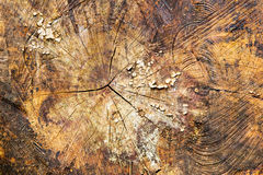 Close up of sawn tree trunks with rings Stock Images