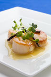 Close up scallop Stock Photography