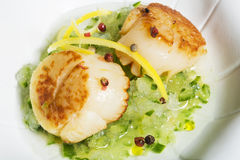 Close-up of scallop dish Stock Images