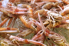 Close up of scampi Stock Photos