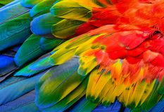 Close up of Scarlet macaw bird`s feathers. Close up of Scarlet macaw bird`s feathers, exotic nature background and texture royalty free stock photo