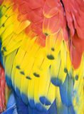 Close up of scarlet macaw feathers, costa rica Royalty Free Stock Photos