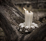 Close up of scary candles in the forest Stock Photos