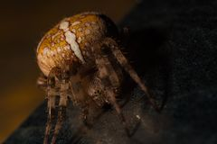Close-up of a scary spider on dark surface stock photo