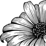 Close-up, schets van een chrysantenbloem, mooie bloembloemblaadjes Idee voor een tatoegering Stock Foto