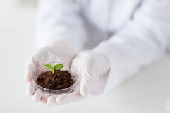 Close up of scientist hands with plant and soil Royalty Free Stock Images