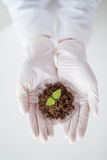 Close up of scientist hands with plant and soil Royalty Free Stock Photo