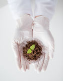 Close up of scientist hands with plant and soil Stock Photography