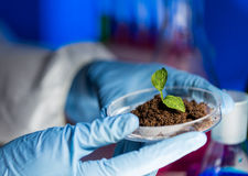 Close up of scientist hands with plant and soil Stock Photo