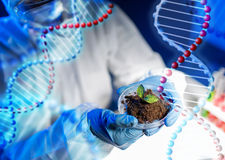 Close up of scientist hands with plant and soil Stock Images