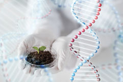 Close up of scientist hands with plant and soil Stock Image