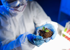 Close up of scientist with plant and soil in lab Royalty Free Stock Photography