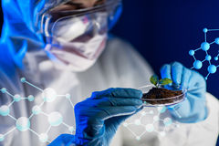 Close up of scientist with plant and soil in lab Royalty Free Stock Image