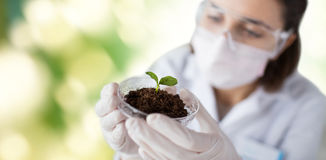 Close up of scientist with plant and soil Stock Photography