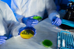 Close up of scientists with test samples in lab Royalty Free Stock Images