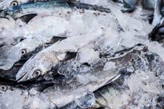 Close up of Scomberomorus cavalla, king mackerel Fish in the market. Close up of Scomberomorus cavalla, king mackerel  Fish in the market Stock Photography