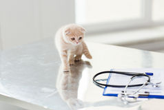 Close up of scottish fold kitten at vet clinic. Medicine, pets, animals, cats and health care concept - close up of scottish fold kitten and stethoscope with Stock Images