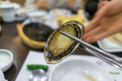 Close up sea abalone Stock Photo