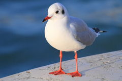 Close up of a sea gull stock images