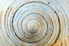 Close up of a sea shell Royalty Free Stock Photo