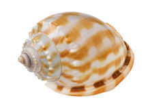 Close-up of sea shell cutout Stock Photography