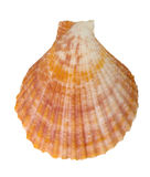 Close-up of sea shell cutout. Close-up of sea shell isolated on white - image11. Top view. Clipping path included Stock Photography