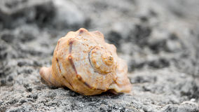 Close-up of sea shell on the rock Stock Photography
