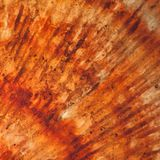 Close Up Of Sea Shell Scallop Pattern Stock Photography