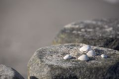 Close Up Of Sea Shells royalty free stock photography