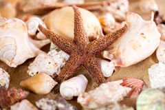 Close up of sea shells with sand Royalty Free Stock Image