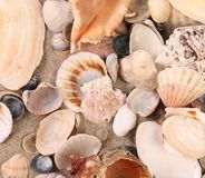 Close up of sea shells. Stock Photo