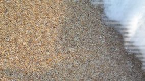 Close up of Sea surf with seashell on the beach. (Handheld shot stock footage