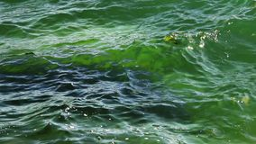 Close-up water of sea stock video footage