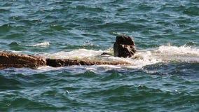 The sea landscape stock footage