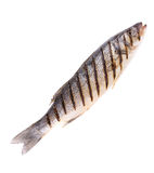Close up of seabass grilled Royalty Free Stock Photos