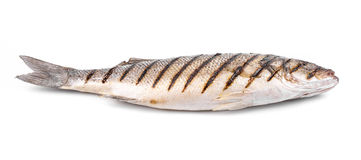 Close up of seabass grilled. Stock Image