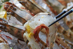 Close up seafood Stock Images