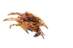 Close up of seafood red crab. Stock Photos
