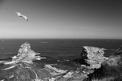 Close up of seagull flying over huge cliff rocks of deux jumeaux in atlantic ocean with waves in black and white Royalty Free Stock Photo