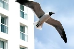 Close-up of seagull in front of a building stock photos